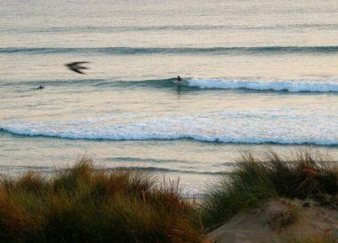 fresh dunes